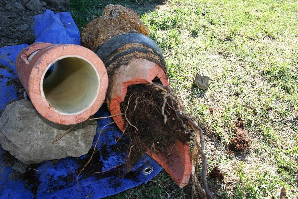 Roots Can Wreak Havoc On Sewer Pipes